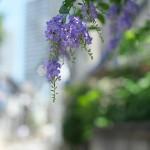 今週の365 DAYS OF TOKYO(8月3日~8月9日) ~ 雑司が谷の夏