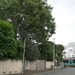 【Tokyo Train Story】お屋敷の脇を通り抜ける都電荒川線