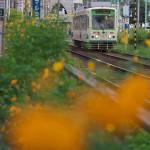 【Tokyo Train Story】都電荒川線沿線花模様