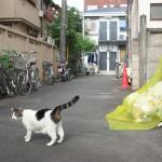 暗渠の近くにはネコがいる!染井銀座・霜降銀座商店街を歩いてみた 『藍染川フォトウォーク』 その2