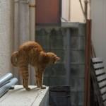 今週の365 DAYS OF TOKYO(11月9日~11月15日) ~ 豊島区、荒川区、台東区のネコたち
