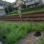 【Tokyo Train Story】線路際のネコ(都電荒川線)