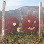 紅葉、コキア、コスモスなどの湯沢高原で見る秋の景色『新潟・群馬紅葉紀行 2015』 その3