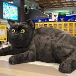 【PR】仙台駅に巨大クロネコが出現!ヤマト運輸の宅急便コンパクトのキャンペーンでクロネコグッズをゲットしよう!