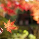湯西川温泉の平家の庄の日帰り温泉は1500円で6つの貸切露天風呂を楽しむことができます!写真付きで全部紹介しますよ 『秋の栃木へ 2015』 その15(最終回)