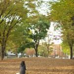 今週の365 DAYS OF TOKYO(1月4日~1月10日) ~ 上野と日暮里の冬の始まり