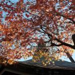 今週の365 DAYS OF TOKYO(1月11日~1月17日) ~ 谷中の秋と冬の変わり目