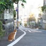 今週の365 DAYS OF TOKYO(1月18日~1月24日) ~ 谷中のネコの冬