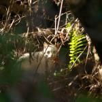 神津島に住むネコたち 山の中で暮らす野生のオッドアイのネコも撮った! 『 #tokyo島旅山旅 で神津島に行こう!』 その25 #神津島
