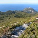 緑のトンネルを抜けた先には絶景登山道が待っている!白島登山口から天上山の山頂を目指して歩き始めてみた! 『 #tokyo島旅山旅 で神津島に行こう!』 その20 #神津島