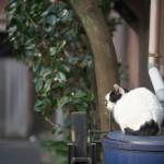 今週の365 DAYS OF TOKYO(2月29日~3月6日) ~ 台東区、新宿区、渋谷区の路地裏風景