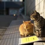 今週の365 DAYS OF TOKYO(3月7日~3月13日) ~ 冬のネコの居場所