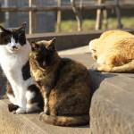 今週の365 DAYS OF TOKYO(3月14日~3月20日) ~ 谷中の猫たちと鳥
