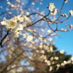 今週の365 DAYS OF TOKYO(3月21日~3月27日) ~ 都内各地での夕暮れ風景とネコたち
