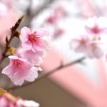 河津桜が咲く時期の熱海で坂道と階段を堪能してみる 『春の青春18きっぷの旅 熱海温泉巡り編』 その1