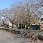 桜が咲く頃にはきっと美しい光景となる筑波鉄道筑波線の真壁駅跡 『春の青春18きっぷの旅 真壁のひなまつり編』 その6