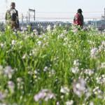 【Tokyo Train Story】春の散歩道(東海道新幹線)
