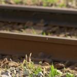 【Tokyo Train Story】つくしにょきにょき(東急多摩川線)