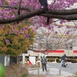 【Tokyo Train Story】桜満開の東急多摩川線沿線