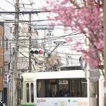【Tokyo Train Story】都電沿線でも桜咲く