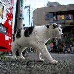 今週の365 DAYS OF TOKYO(4月25日~5月1日) ~ 春先の日暮里のネコたち