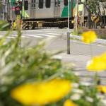 【Tokyo Train Story】春の花咲く東急多摩川線沿線