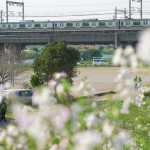 【Tokyo Train Story】春の多摩川散歩(東海道本線)