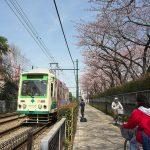 【Tokyo Train Story】都電沿線の桜のトンネル