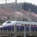 【Tokyo Train Story】桜と東北新幹線