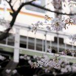 【Tokyo Train Story】東急東横線の桜がある風景