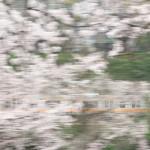 【Tokyo Train Story】桜の向こうの中央線を流し撮り