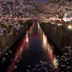 【東京春景色】目黒川沿いの桜が満開!中目黒駅と池尻大橋駅の間を歩いて、美しい夜桜を撮影しながらお花見してきた!