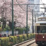 【Tokyo Train Story】桜並木の横を走る都電荒川線のレトロ風車両9001