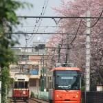 【Tokyo Train Story】桜が咲く都電荒川線の沿線風景