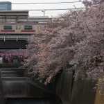 【Tokyo Train Story】桜満開の目黒川上の中目黒駅(東急東横線)