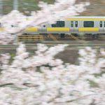 【Tokyo Train Story】桜の中を駆け抜ける総武線