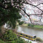 【Tokyo Train Story】春色の景色(総武線)