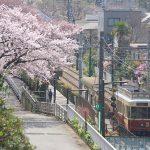 【Tokyo Train Story】都電荒川線のレトロ風車両と満開の桜