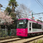 【Tokyo Train Story】都電荒川線沿線同じ木にピンクと赤の異なる色の花が咲く木瓜(都電荒川線沿線)