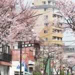 【Tokyo Train Story】桜咲く日暮里・舎人ライナー沿線風景