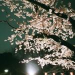 【東京春景色】RICOH GR1sで撮影した上野公園の夜桜【フィルムカメラ】
