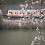 【Tokyo Train Story】外堀の桜と中央線