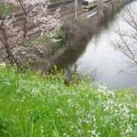 【Tokyo Train Story】春の花咲く総武線沿線風景