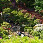 【東京春景色】根津神社では遅咲きのつつじが満開!つつじまつりに行くならできるだけ早くがお勧めですよ