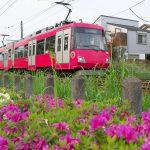 【Tokyo Train Story】ツツジ咲く東急世田谷線沿線風景
