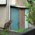 今週の365 DAYS OF TOKYO(6月6日~6月12日) ~ 春の日暮里近辺の景色