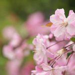 桜などの春の花咲く旧芝離宮恩賜庭園でのんびり撮影散歩 150円でこれだけの緑と花が見られるのはかなりお得!