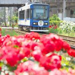 【Tokyo Train Story】バラの中を走る都電荒川線新型車両8900形