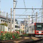 【Tokyo Train Story】バラが咲くS字カーブを都電荒川線が行く