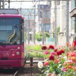【Tokyo Train Story】どこまでも続くバラの道(都電荒川線)